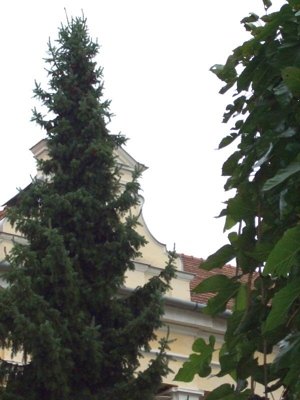 SZEME158-1